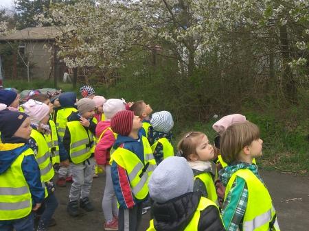 Wiosenny spacer w grupie Tulipany